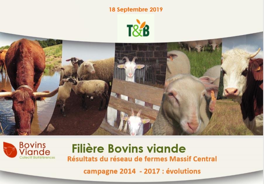 Filière bovins viandes : résultats du réseau de fermes Massif Central